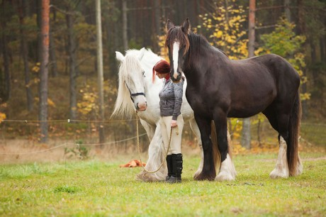 Benefits of Animal Chiropractic - Options for Animals College of Animal Chiropractic - Wellsville, KS