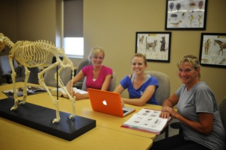 Postgraduate Essentials in Animal Chiropractic Course - Options for Animals College of Animal Chiropractic - Wellsville, KS