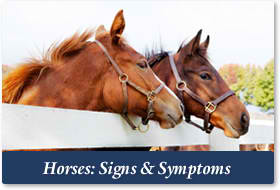 Horses - Options for Animals College of Animal Chiropractic - Wellsville, KS