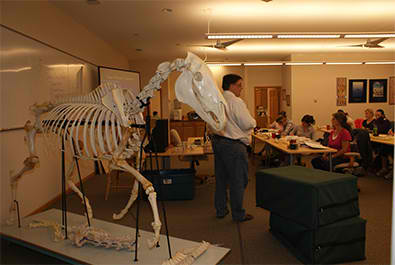 Chiropractic and the VSC - Options for Animals College of Animal Chiropractic - Wellsville, KS