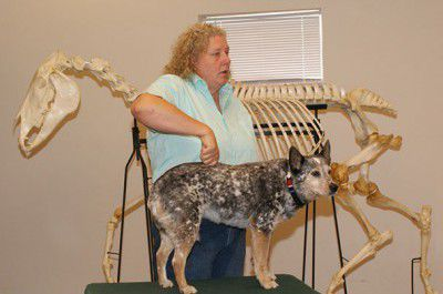 what is animal chiro
