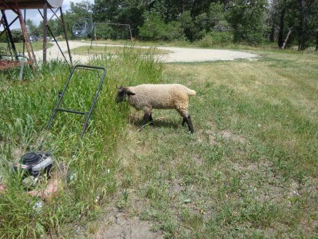 Ewe - Options for Animals College of Animal Chiropractic - Wellsville, KS