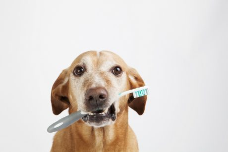 The Importance of Pet Dental Health