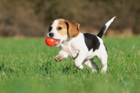 Tips for Potty Training Your Pets
