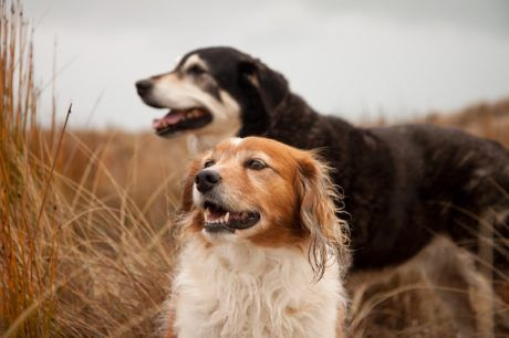 Pet Care Tips For Senior Dogs